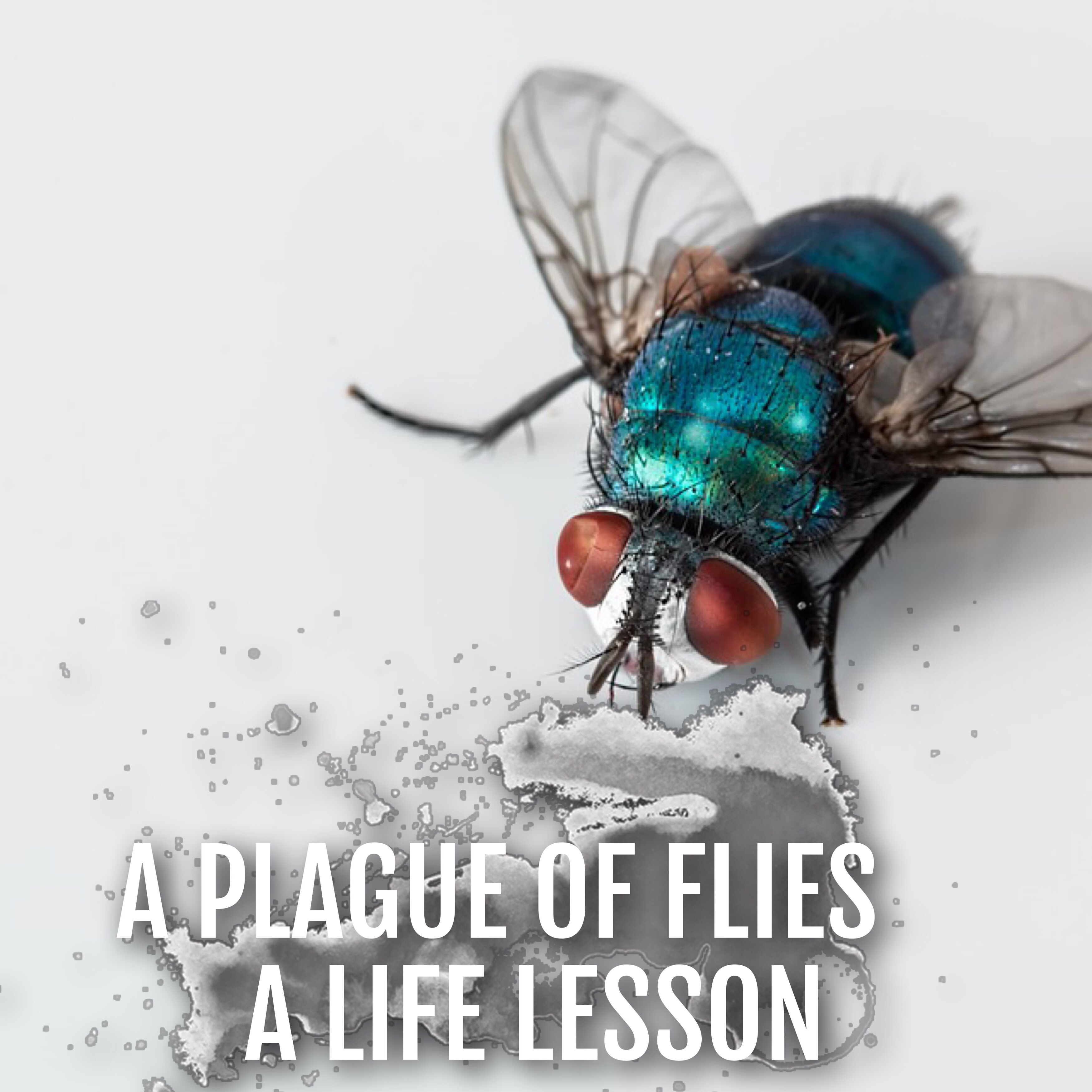 A Plague of Flies on Both Your Houses | Amber Mattingly